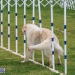Dog Agility Trials Bermuda, March 28 2015-12