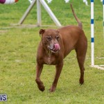 Dog Agility Trials Bermuda, March 28 2015-121