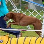 Dog Agility Trials Bermuda, March 28 2015-123