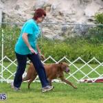 Dog Agility Trials Bermuda, March 28 2015-125