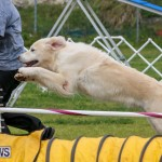 Dog Agility Trials Bermuda, March 28 2015-13