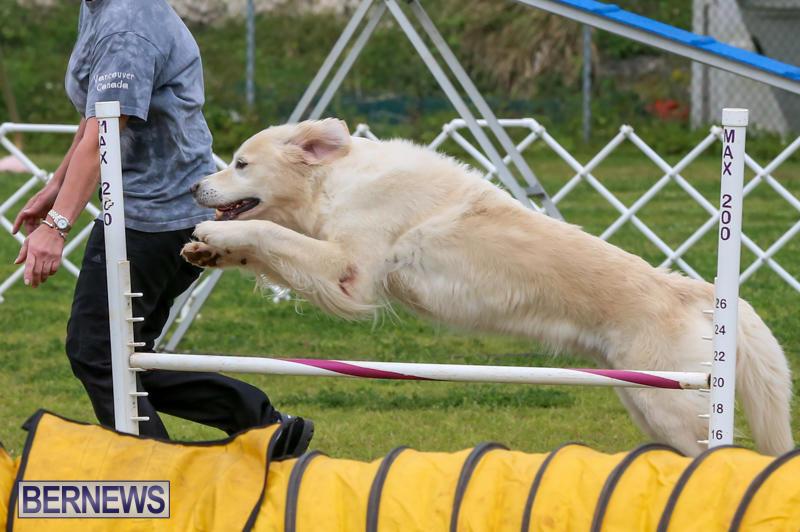 Dog-Agility-Trials-Bermuda-March-28-2015-13
