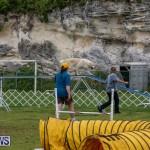 Dog Agility Trials Bermuda, March 28 2015-15