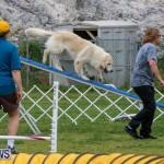Dog Agility Trials Bermuda, March 28 2015-16