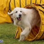 Dog Agility Trials Bermuda, March 28 2015-20
