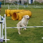 Dog Agility Trials Bermuda, March 28 2015-21