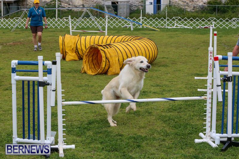 Dog-Agility-Trials-Bermuda-March-28-2015-21