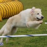 Dog Agility Trials Bermuda, March 28 2015-22