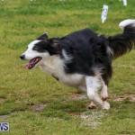 Dog Agility Trials Bermuda, March 28 2015-24