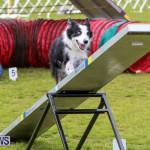 Dog Agility Trials Bermuda, March 28 2015-27