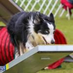 Dog Agility Trials Bermuda, March 28 2015-28