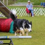 Dog Agility Trials Bermuda, March 28 2015-29