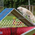 Dog Agility Trials Bermuda, March 28 2015-3