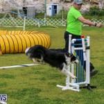 Dog Agility Trials Bermuda, March 28 2015-31