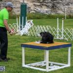 Dog Agility Trials Bermuda, March 28 2015-32