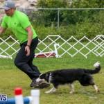 Dog Agility Trials Bermuda, March 28 2015-36
