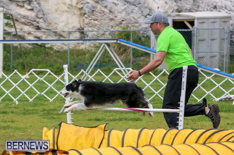 Dog-Agility-Trials-Bermuda-March-28-2015-37