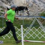 Dog Agility Trials Bermuda, March 28 2015-39