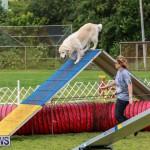 Dog Agility Trials Bermuda, March 28 2015-4