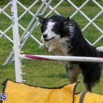 Dog Agility Trials Bermuda, March 28 2015-42