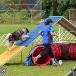 Dog Agility Trials Bermuda, March 28 2015-46
