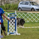 Dog Agility Trials Bermuda, March 28 2015-48