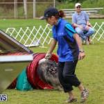 Dog Agility Trials Bermuda, March 28 2015-52