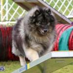 Dog Agility Trials Bermuda, March 28 2015-55