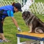 Dog Agility Trials Bermuda, March 28 2015-58