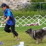 Dog Agility Trials Bermuda, March 28 2015-60
