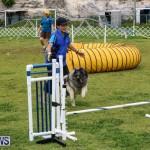 Dog Agility Trials Bermuda, March 28 2015-65