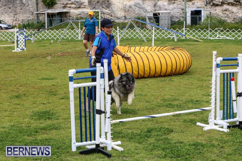 Dog-Agility-Trials-Bermuda-March-28-2015-65