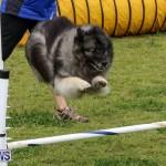 Dog Agility Trials Bermuda, March 28 2015-66