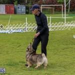 Dog Agility Trials Bermuda, March 28 2015-67