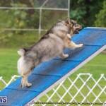 Dog Agility Trials Bermuda, March 28 2015-68