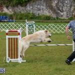 Dog Agility Trials Bermuda, March 28 2015-7