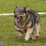 Dog Agility Trials Bermuda, March 28 2015-71