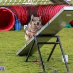 Dog Agility Trials Bermuda, March 28 2015-74