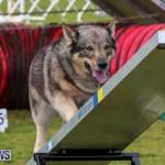 Dog Agility Trials Bermuda, March 28 2015-75
