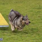 Dog Agility Trials Bermuda, March 28 2015-76