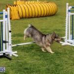 Dog Agility Trials Bermuda, March 28 2015-77