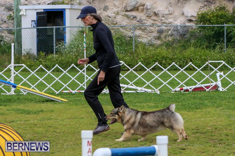 Dog-Agility-Trials-Bermuda-March-28-2015-79