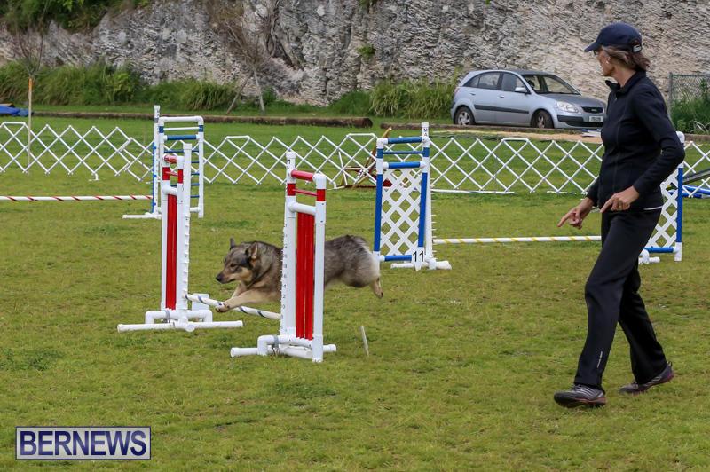 Dog-Agility-Trials-Bermuda-March-28-2015-83