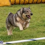 Dog Agility Trials Bermuda, March 28 2015-84