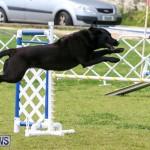 Dog Agility Trials Bermuda, March 28 2015-88