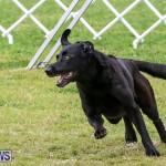 Dog Agility Trials Bermuda, March 28 2015-89