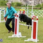 Dog Agility Trials Bermuda, March 28 2015-90