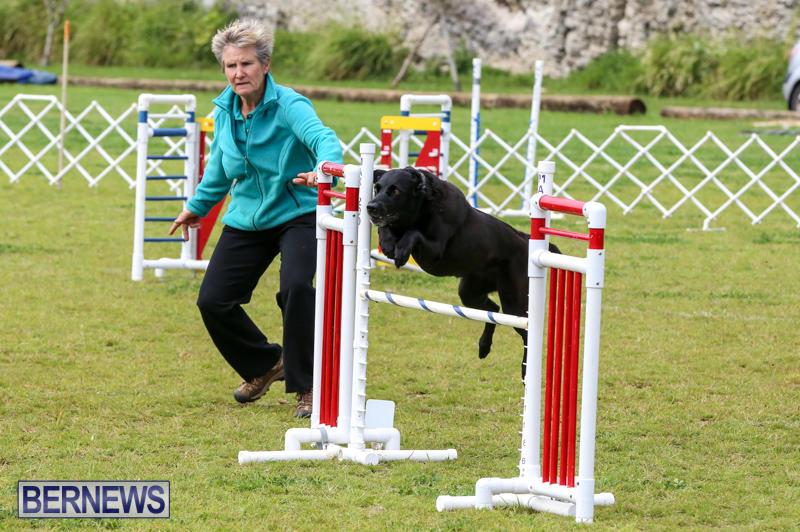 Dog-Agility-Trials-Bermuda-March-28-2015-90