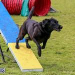 Dog Agility Trials Bermuda, March 28 2015-94