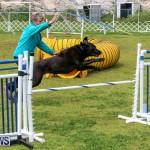 Dog Agility Trials Bermuda, March 28 2015-96